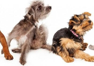מוצרי הדברה לכלבים