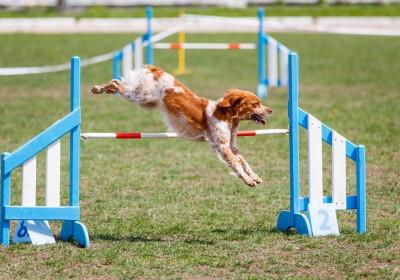 מתקני אג'ילטי מקצועיים לכלבים