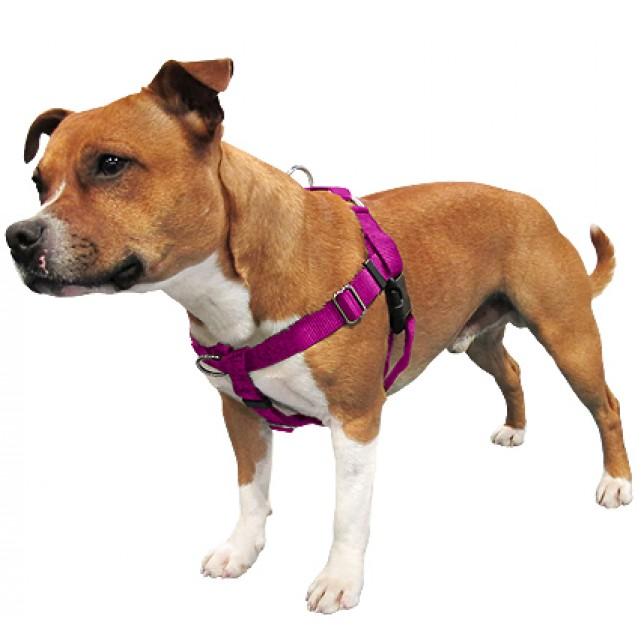 רתמת פרידום לכלבים - רתמה נגד משיכות מגוון צבעים ובכל המידות
