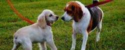 כלב לחוץ בטיול, איך זה נראה ומה אפשר לעשות כדי לעזור לו ולנו